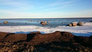 Kitokia Baltijos pakrantė