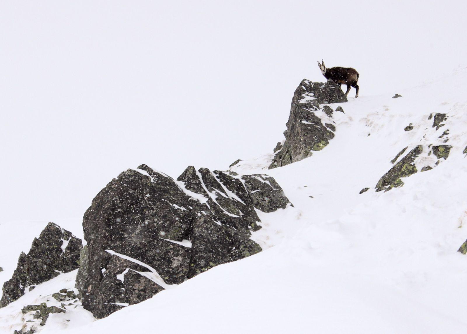 Pagaliau ir šiuose kalnuose sutikau ožį. Arba jis sutiko mane.