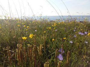 Žydinčių pievų grožis