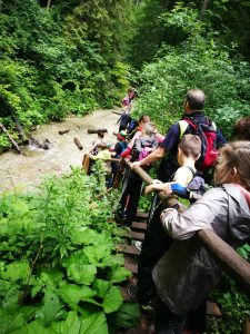 Trasa leidžiasi į kalnų upelio vagą