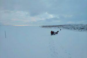 Sniego dykumoje