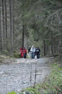 Kalnus pakeitė miškai