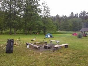 Gandrų invazija KK stovyklavietėje