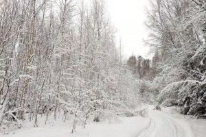 Žiemos idilė