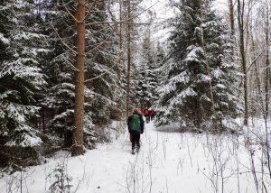 Per baltus miškus