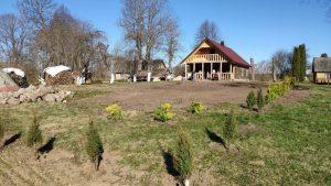 KK namus apjuosė 190 tujų sodinukų