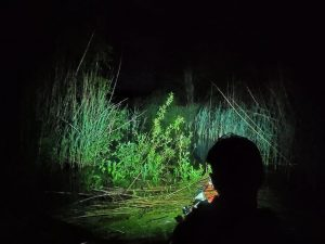 Karklai naktyje