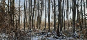 Miškas šlapynėje