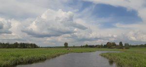 Svylos upės, šlapžemių bei pabirusių kūnelių bendrystė